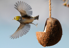"title=""bird feeders, supplements, food, attract the birds"" onmouseover=""this.title=´´;"""