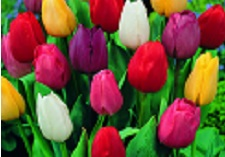 """title=""""Flowering, Spring, Bulbs"""" onmouseover=""""this.title=´´;"""""""