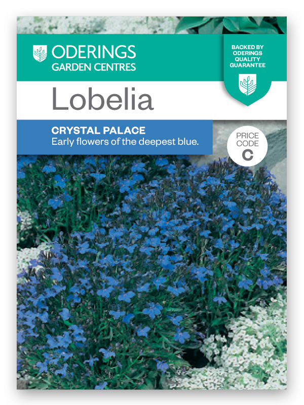 Oderings Garden Centres Flower Seeds Lobelia Crystal Palace