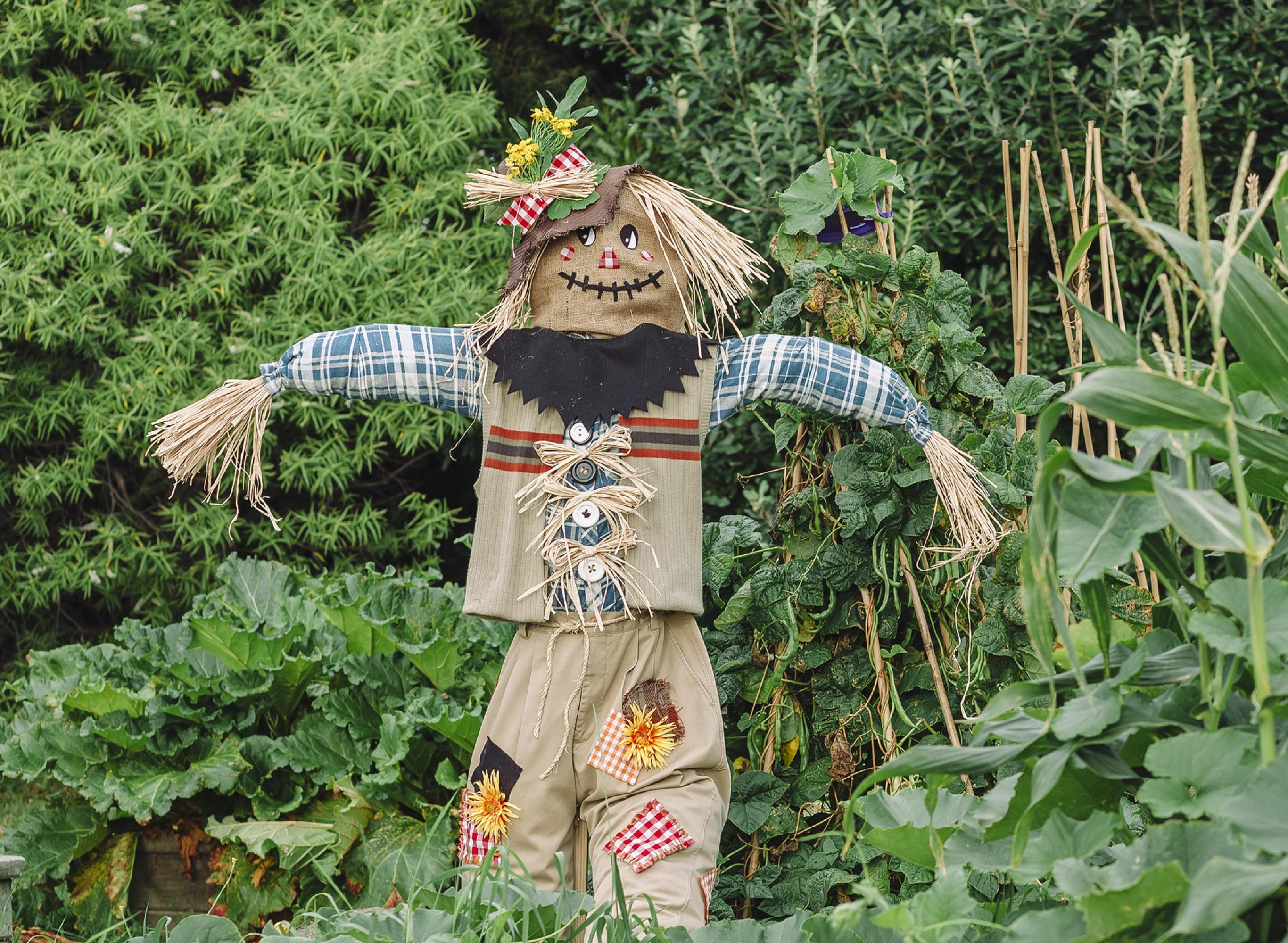 Garden Scarecrows Nz Garden Ftempo