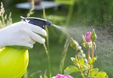Garden, Maintenance