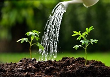 Oderings Garden Centres   Plants - Oderings grow a huge range of plants from bedding to shrubs