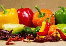 premium peppers, Seedlings